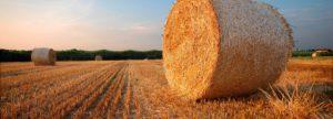 Сельскохозяйственные ангары